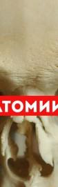 """Экскурсия в музей """"Анатомии человека"""""""